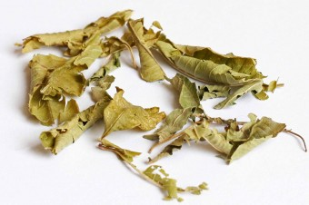 IMG_5561 Lemon Verbena2
